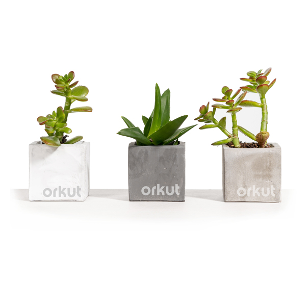 logo branded succulents set