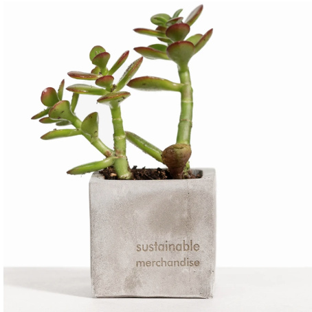 sustainable succulent corporate gift