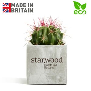 Branded Clay Plant Pot with Cactus